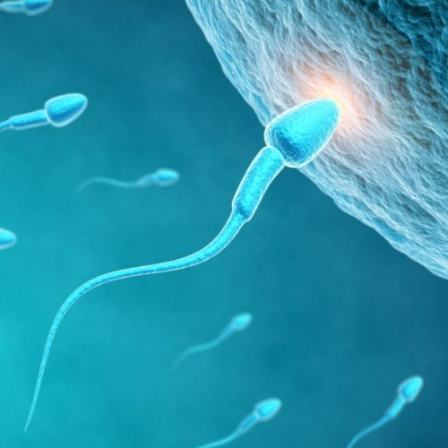 sperm-egg-fertility-fertilization-stock