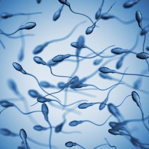 sperm-on-a-blue-background